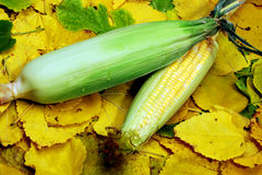 Corn on Cob Royalty Free Stock Images