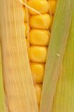 Corn on cob Stock Photos