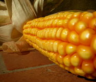 Corn-cob Fotografía de archivo