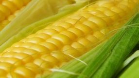 Corn cob Royalty Free Stock Images