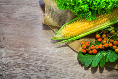 Corn cob with ash berries on wood Stock Images