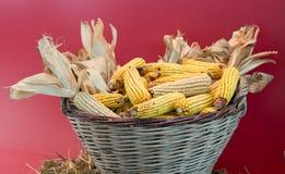 Corn cob in basket Stock Photo
