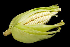 Corn Cob on Black Royalty Free Stock Photos
