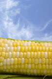 Corn Cob and Blue Sky. Macro with selective focus on the rows of corn - blue sky with wispy clouds space good for copy Stock Photos