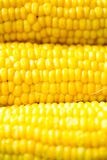 Corn cob. Boiled corn cob on the pottery Stock Photography
