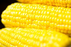 Corn cob. Boiled corn cob on the pottery Royalty Free Stock Photography