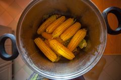 Corn on the cob boiling in a pot royalty free stock images