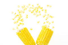 Corn cob broke in half with scattered kernels, on white Royalty Free Stock Images