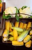 Corn cob and cauliflower Stock Photography
