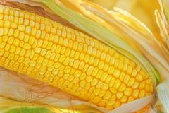 Corn cob close up Stock Photo