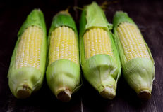 Corn on the cob, close up Stock Images