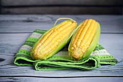 Corn on the cob. Close up of two raw corns on the cob Stock Photos