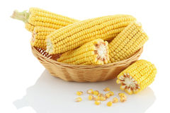Corn cob close up in a wicker basket on a white background. Stock Photography