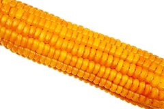 Corn cob closeup. Stock Image