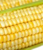 Corn on the cob Stock Photos