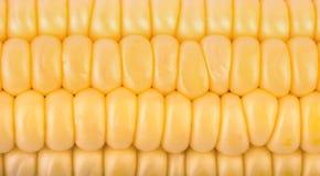 Corn on the cob closeup. Background from fresh grains of corn cob closeup Stock Photo