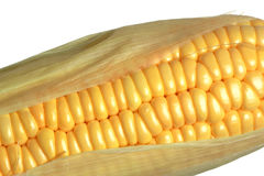 Corn cob closeup. Fresh corn on the cob with leaves close up stock photo