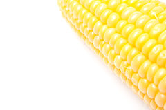 Corn cob closeup isolated, selective focus Stock Image