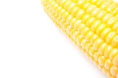 Corn cob closeup isolated, selective focus. Corn cob closeup isolated on white, selective focus Stock Image