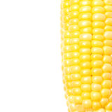 Corn cob closeup isolated and space for text. Corn cob closeup isolated on white and space for text Royalty Free Stock Image