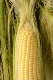 Corn on the Cob Closeup Stock Photos