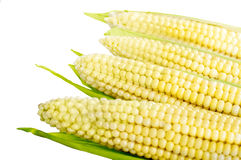Corn on the cob closeup Royalty Free Stock Image