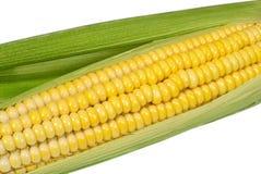 Corn cob closeup on white background. Corn cob closeup isolated on white background Stock Image