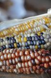 Corn On The Cob, Commodity, Bead, Maize Stock Photography
