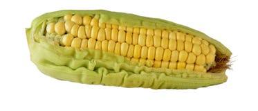 Corn on cob. Royalty Free Stock Photography