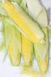 Corn in Cob Stock Photo