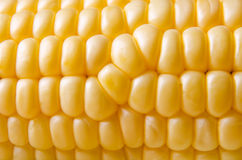 Corn cob detail Royalty Free Stock Photo