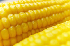 Corn cob details. Macro view Stock Photography
