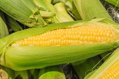 Corn on the Cob. Stock Images