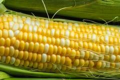 Corn on a cob. Fresh corn on a cob with husk and silk Stock Photos
