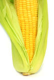 Corn cob between green leaves Royalty Free Stock Photography