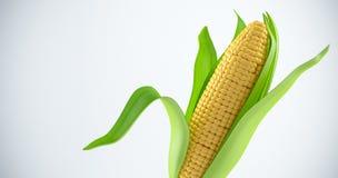 Corn stock illustration