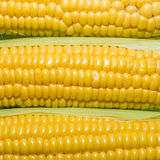 Corn cob with green leaves Stock Photo