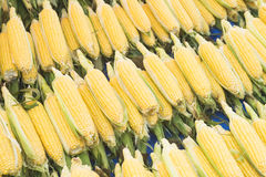 Corn cob between green leaves. Fresh sweet corn in the farmers market. Stock Images