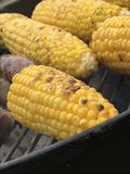Corn on the cob Royalty Free Stock Images
