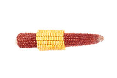 Corn cob half hulled. Dent corn cob half hulled isolated on white background Stock Photography