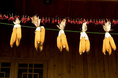 Corn cob hung in wooden house. Yellow corn cob and red hot pepper hung in wooden house,in China Stock Image