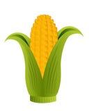 Corn cob. Illustration of a half open corn cob on a white background stock illustration