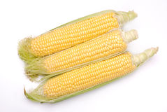 Corn on the cob isolated Royalty Free Stock Image