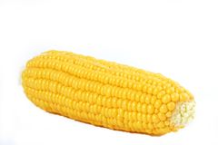 Corn Cob Isolated. On white stock image