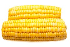 Corn-cob isolated Royalty Free Stock Image