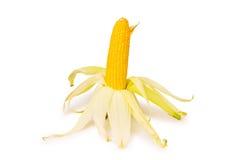 Corn cob isolated Royalty Free Stock Photos