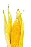 Corn cob isolated Royalty Free Stock Photography