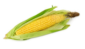 Corn on the cob isolated Royalty Free Stock Images