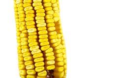 Corn cob isolated Stock Image