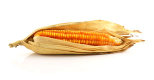 Corn on the cob isolated on white background. Stock Photos